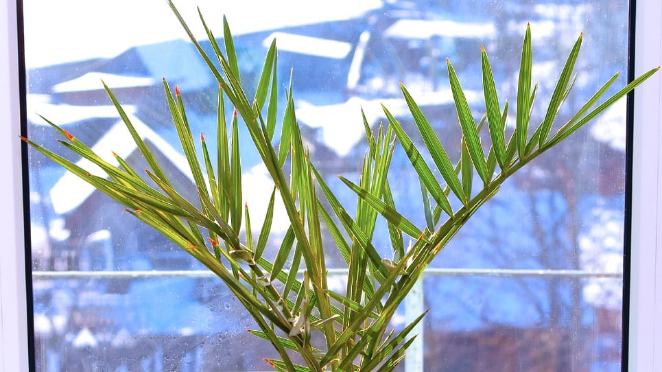 Top 8 Non-Toxic Plants for Improving Indoor Air Quality